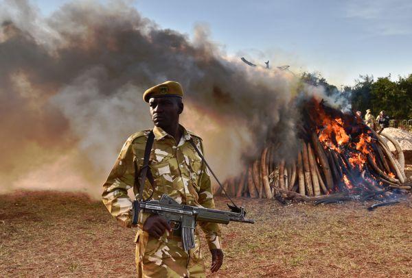 droni contro bracconieri, la caccia è aperta, corno d'africa